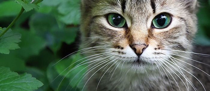 8 Facts About Your Cat Whiskers Boundless Shop