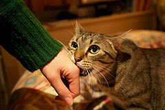 Cat Petting And Nibbling While