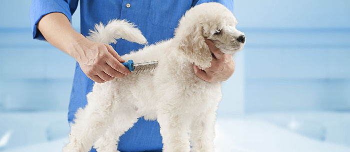 It S Normal For Dogs To Shed But How Much Shedding Is Too Find Out What Do If You Notice Your Dog Losing Hair