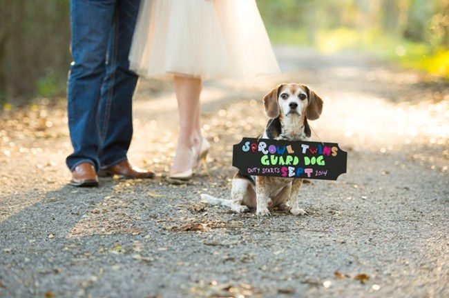8 Ideas For PetCentered Cards And Announcements Care Community – Birth Announcement with Dog
