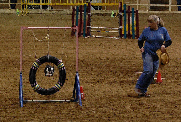 Create A Dog Agility Obstacle Course At Home - Care.com ...