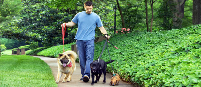 how to make your dog walking business successful
